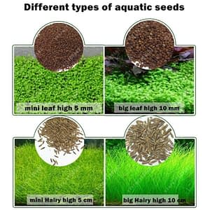 Plant Seed for Carpeting