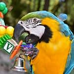 General Care for Pet Birds